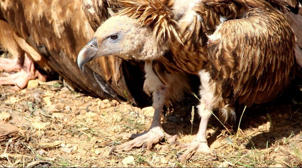 触目惊心!云南破获特大非法猎捕珍贵、濒危野生动物案