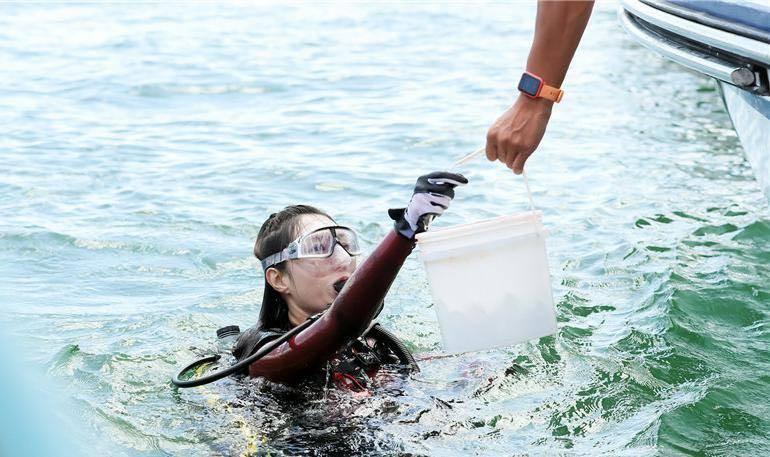 首届全国珊瑚日深圳启动!500人认养珊瑚种苗种到大鹏海域