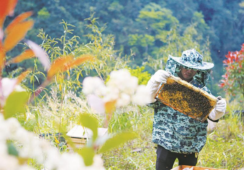 脱贫新路子:林下养鸡、林下养蜂、林下种植