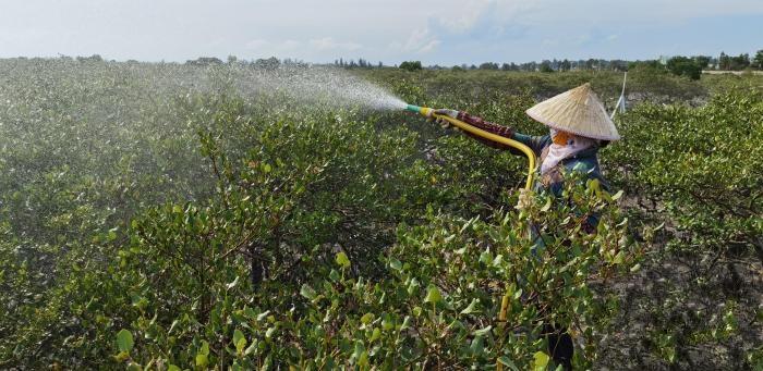 广西北海红树林受损区 工人忙清洗白色粉末