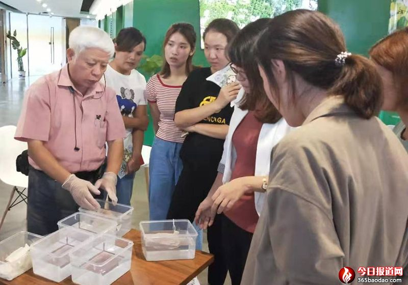 来自台湾阿里山的神奇果――爱玉搓搓乐(亲子)体验活动在济南举办