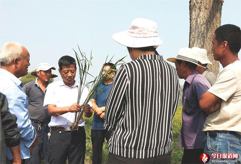 """山东郯城:农专家""""把脉""""众农民觉醒"""