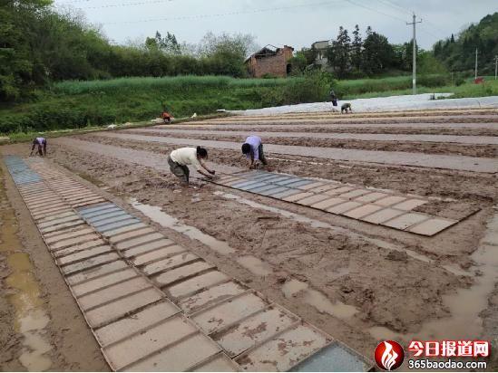 湖南省衡南县农民专业合作社强强联合抢抓早稻生产忙育秧