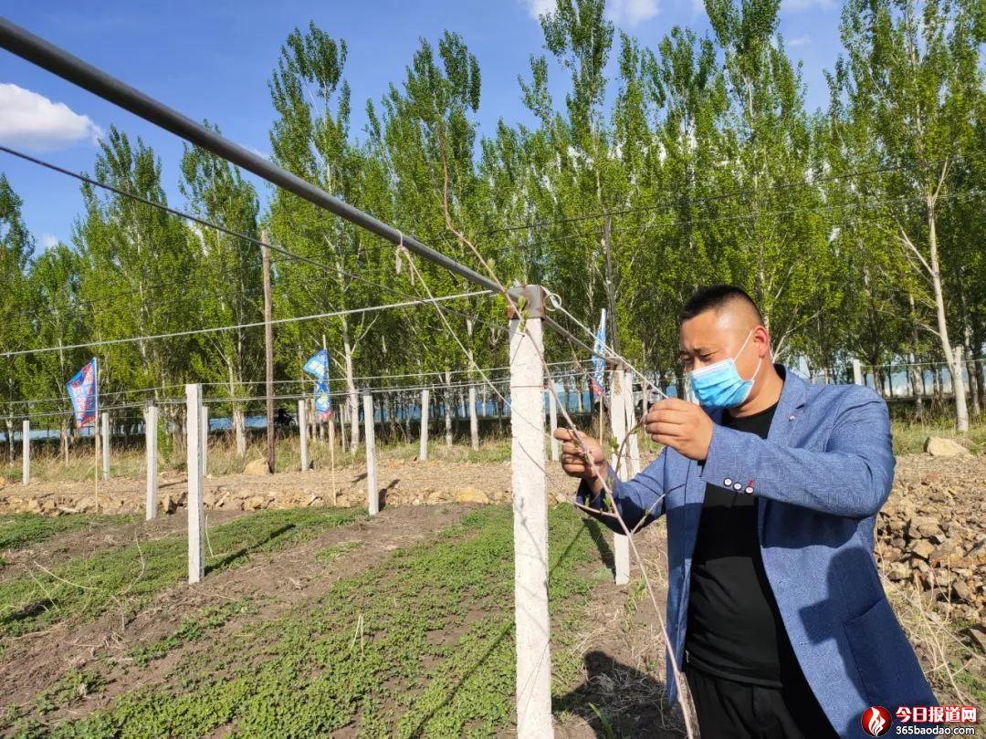 引进软枣猕猴桃种植项目  扶贫户走上特色种植道路