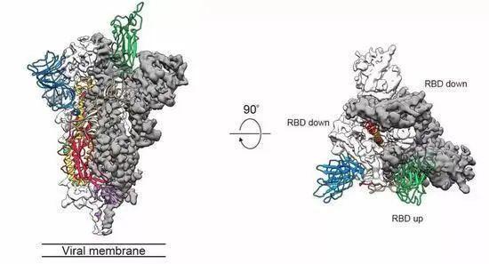 新冠病毒到底是不是人工合成的?最新的证据来了