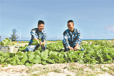 """点沙成土"""":西沙海滩种植蔬菜首获成功"""