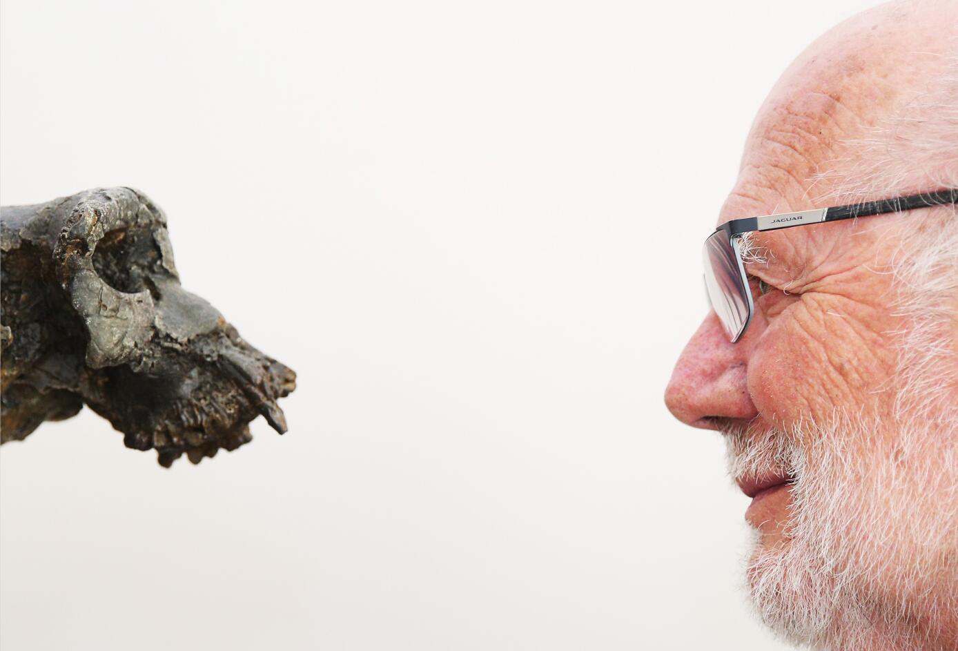 """世界各地最早古人类是谁?图迈""""辈分""""最高"""