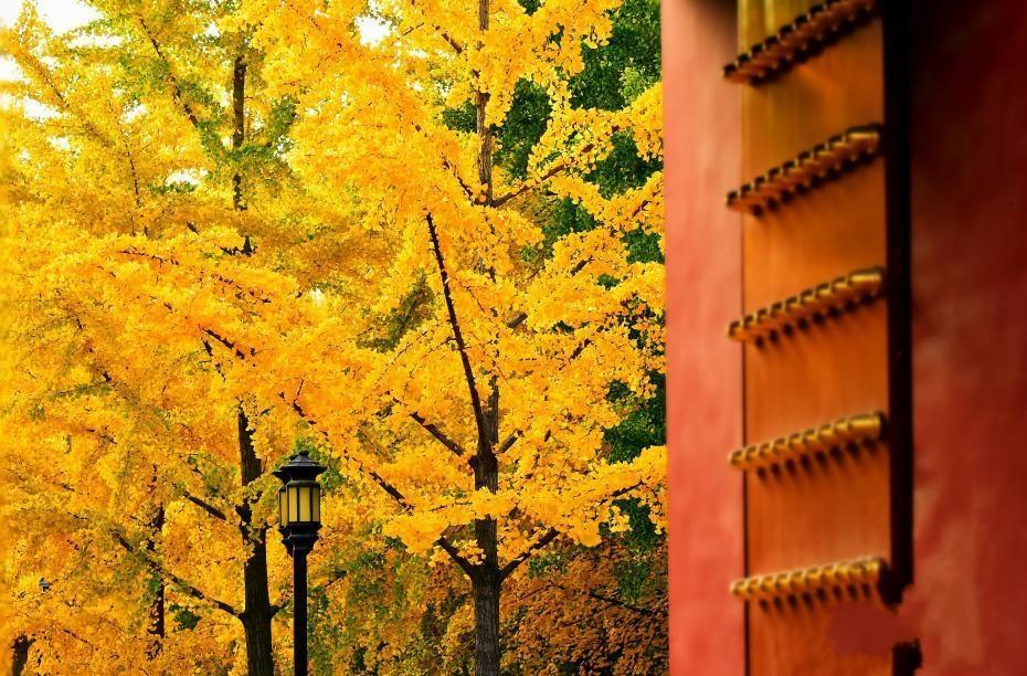 北京秋叶烂漫 这才是秋天的颜色!