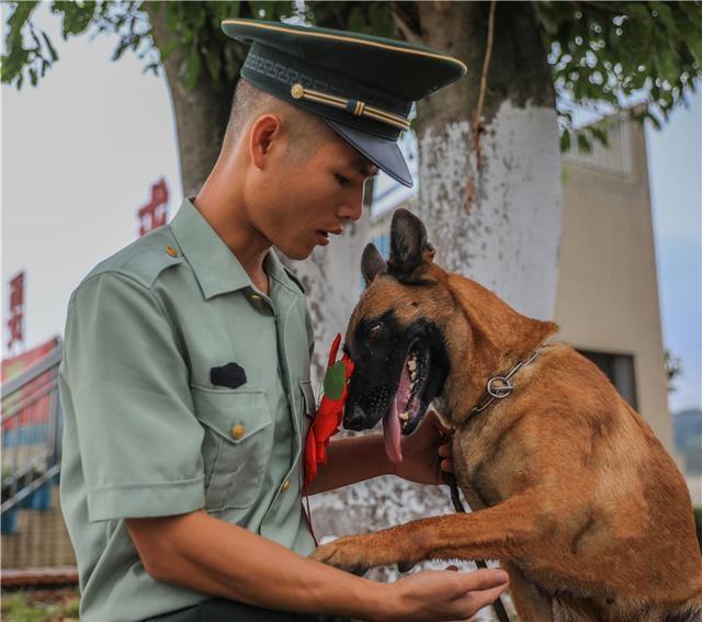 老兵退伍 相伴5年的警犬紧紧咬住他的行李……