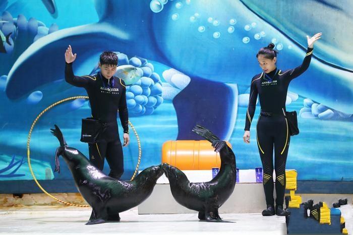 """南京海底世界""""奶爸奶妈""""的一天"""