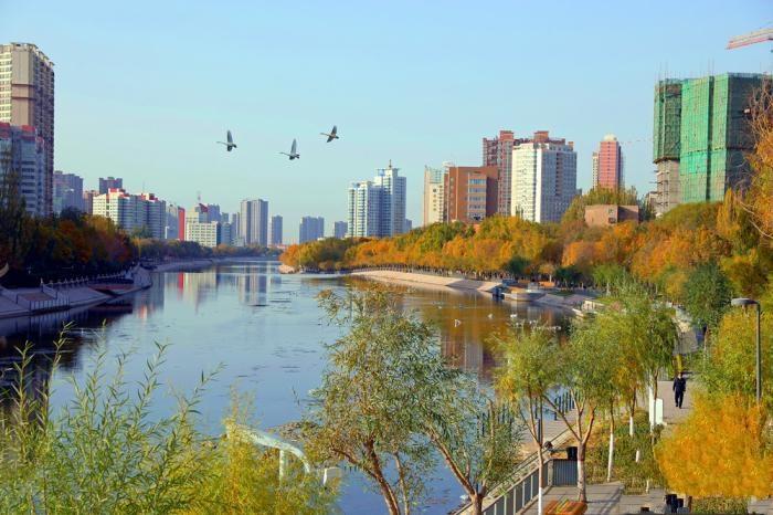 深秋新疆风景如画 越冬天鹅翩翩起舞