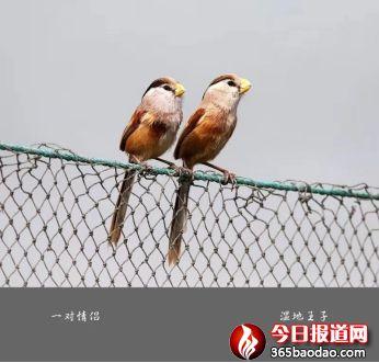 湿地王子——天津滨海北大港湿地里的守望者202_副本.jpg