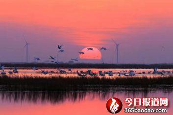 湿地王子——天津滨海北大港湿地里的守望者286_副本.jpg
