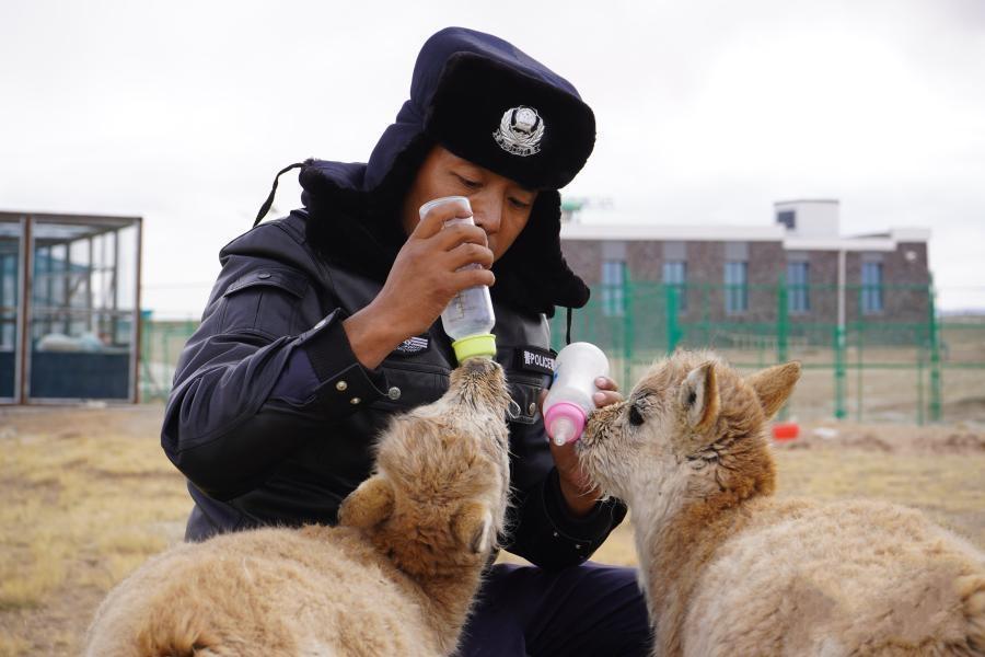 走进可可西里野生动物救助中心