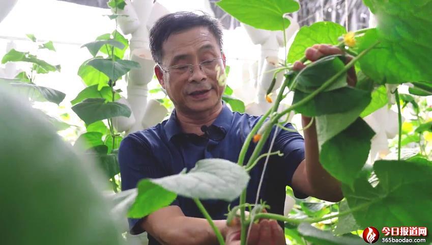 乡村振兴中的科技特派员曹海青:脚下的泥土与深情