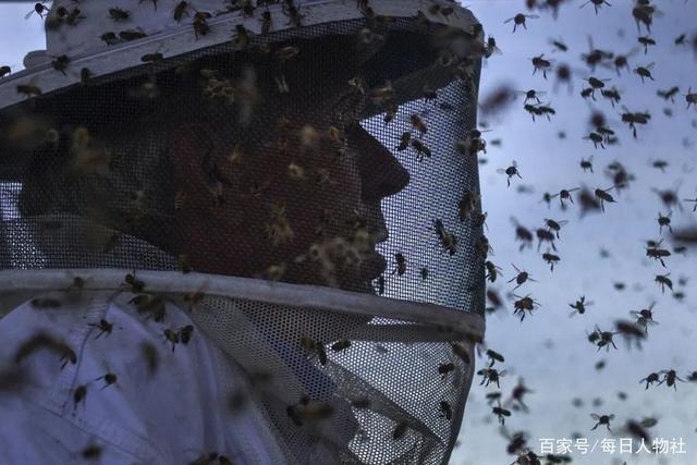 养蜂人刘德成,无法再追花