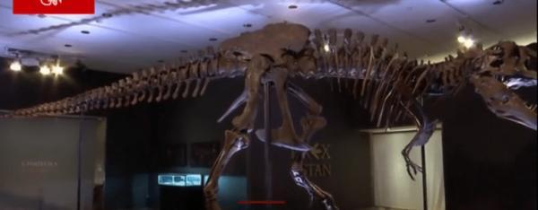 世界上最完整霸王龙骨架拍卖价2.16亿元成交,刷新世界纪录