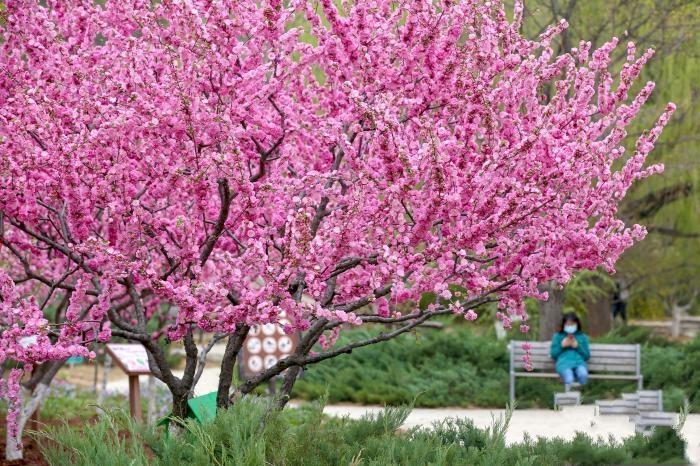 第九届北京森林文化节开幕 全年开展200多场文化活动